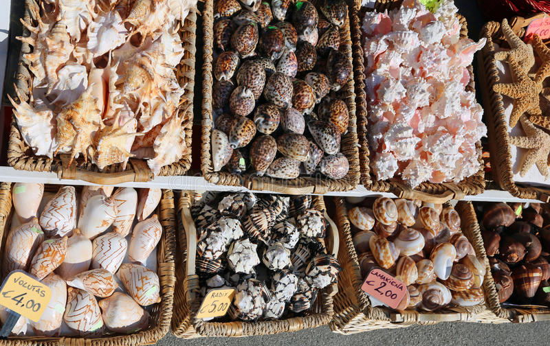 Background of exotic shells in baskets for sale at a souvenir s royalty free stock photos