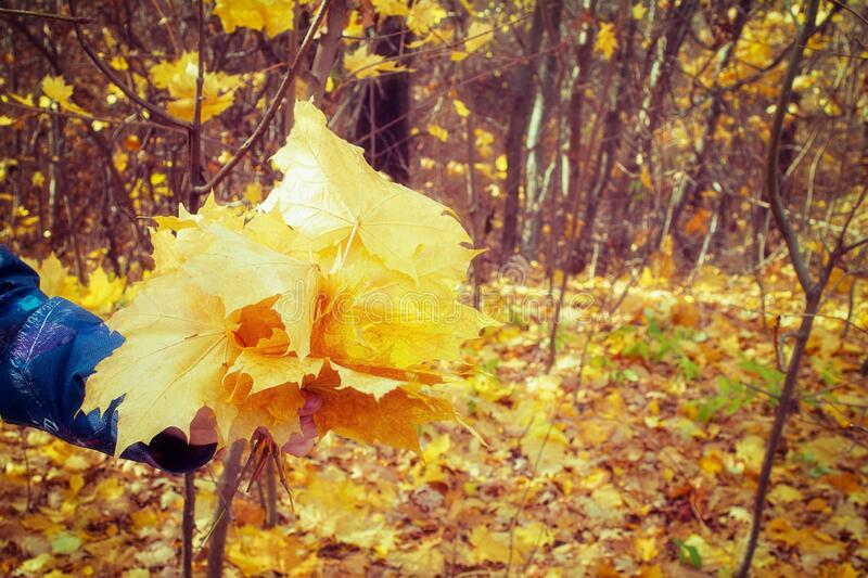 Background of fallen autumn yellow orange leaves royalty free stock images