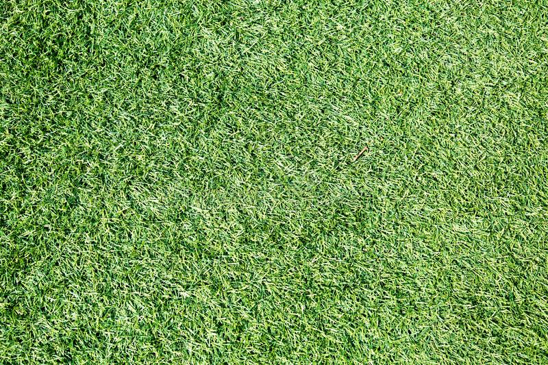Background of faux green grass. Texture backgrounds. royalty free stock images