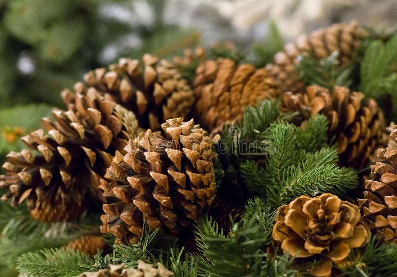 Background festive winter seasonal, group brown lump on fresh green branches fir close-up stock photo