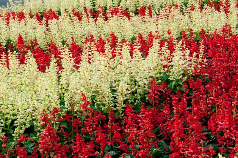 Background Flower Garden royalty free stock photos