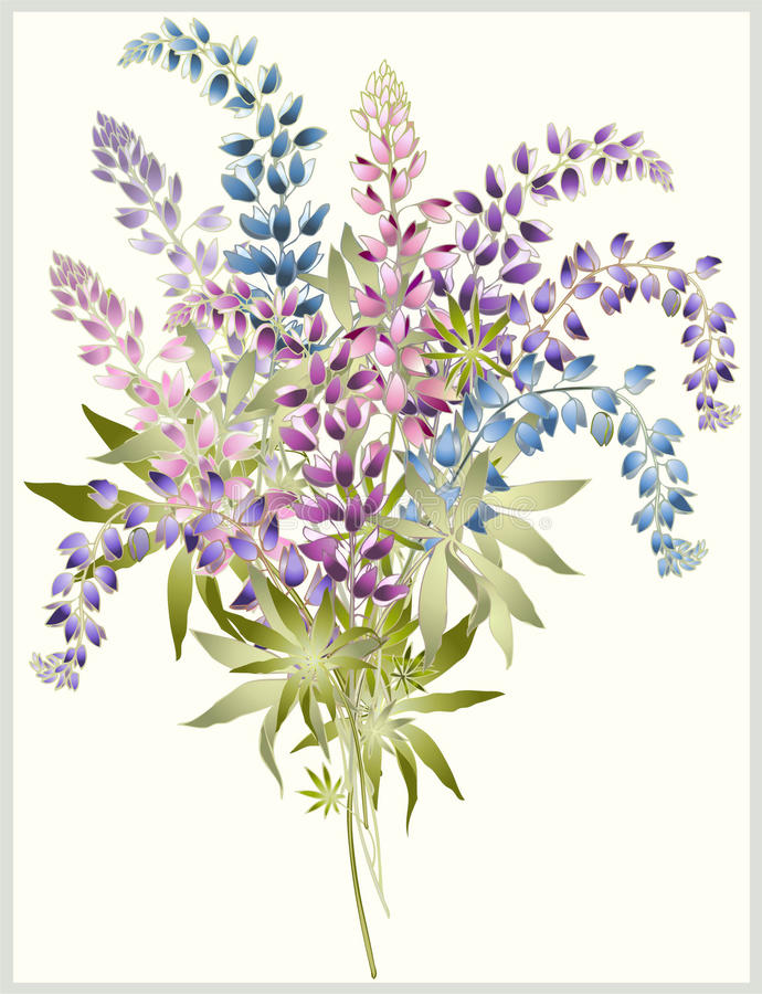 Download Background From Flower Of The Lupine . Bouquet Fro Stock Illustration - Image: 32040001