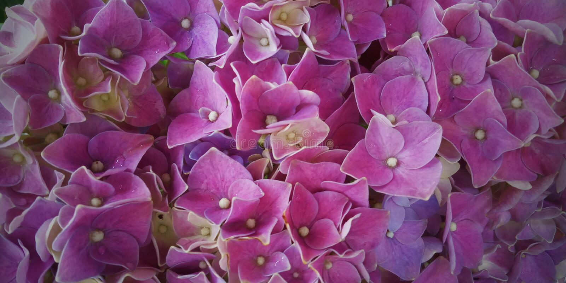 Background flower royalty free stock image