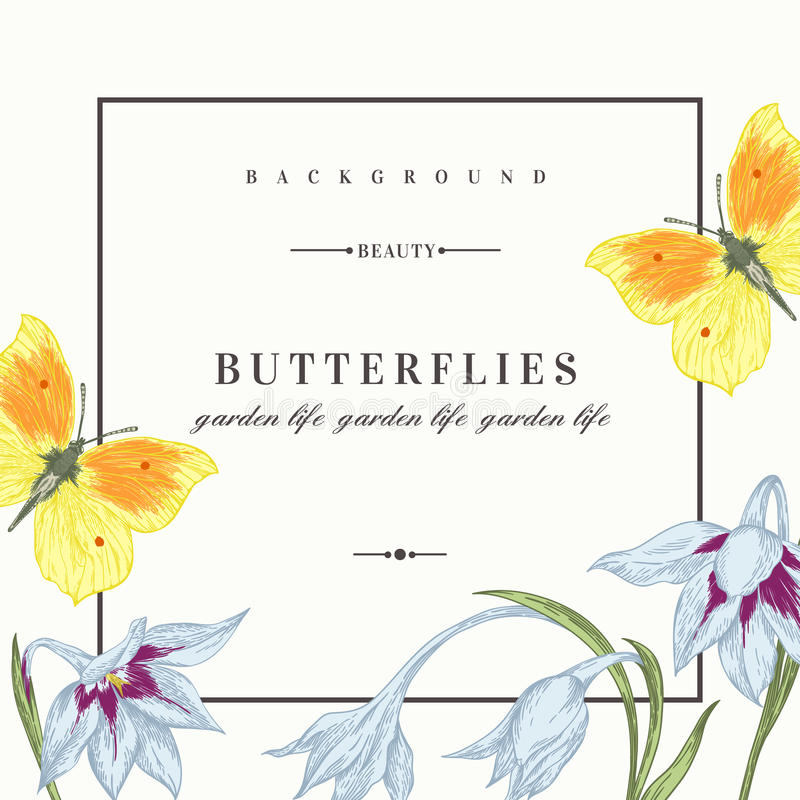 Background with flowers and butterflies. Summer background with flowers and butterflies. Vector illustration. Acidanthera flowers vector illustration
