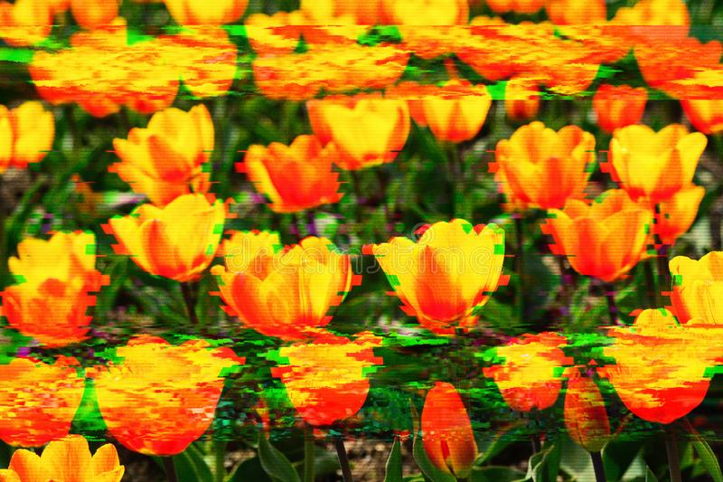 Background of flowers in glitch effect. Romantic background of spring varied colors in glitch effect stock images