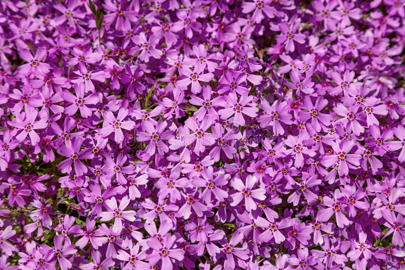 Background of flowers stock image