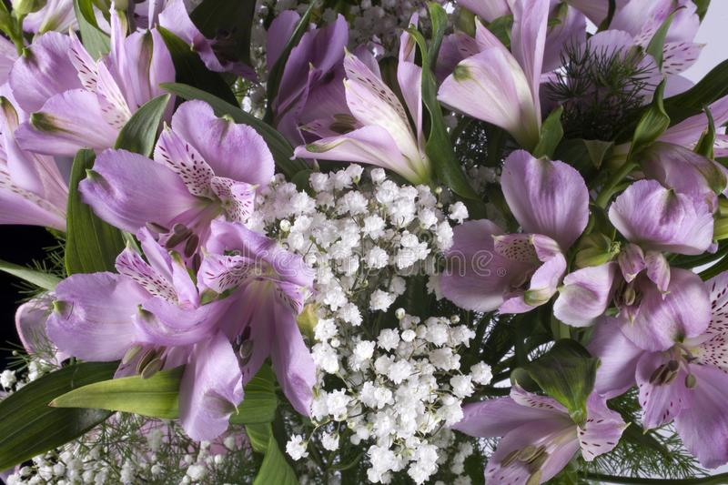 Background of flowers of purple fragrant lily in close-up. Beautiful background of flowers of purple fragrant lily in close-up stock photo