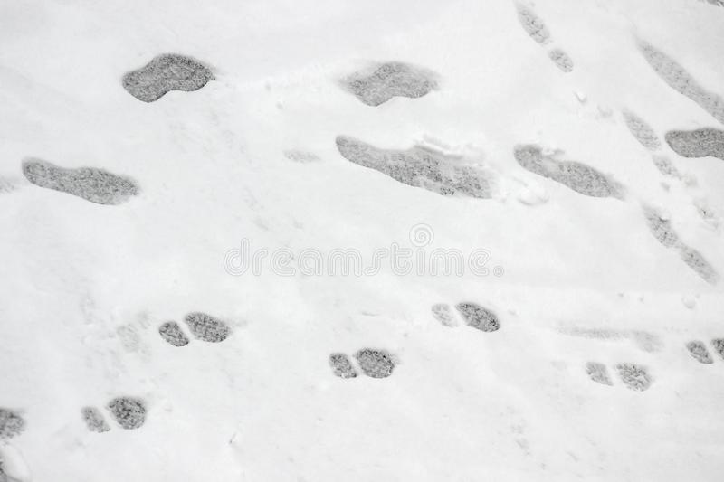Image result for 1 adult 2 childrens footprints in the snow