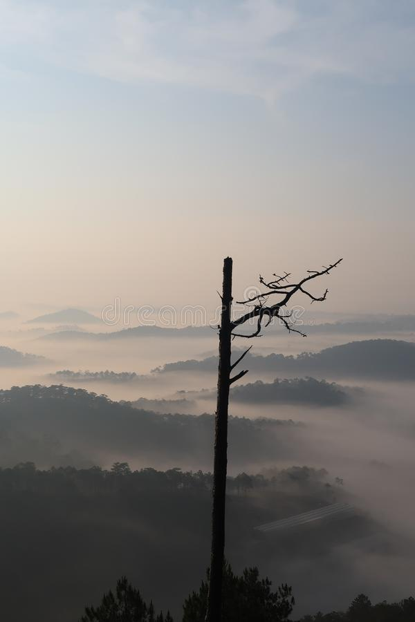 Background with fresh air, magic light and dense fog cover forest in the plateau at dawn  stock photography