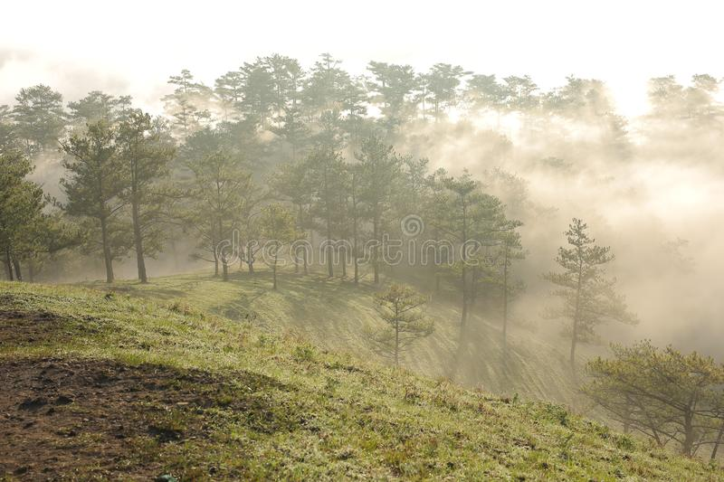 Background with fresh air, magic light and dense fog cover forest in the plateau at dawn royalty free stock images