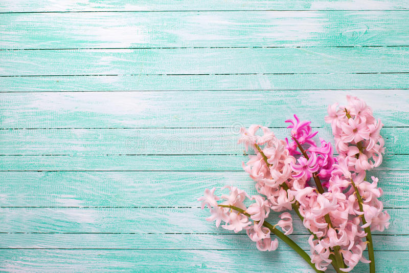 Background with fresh pink flower hyacinths on turquoise paint stock images