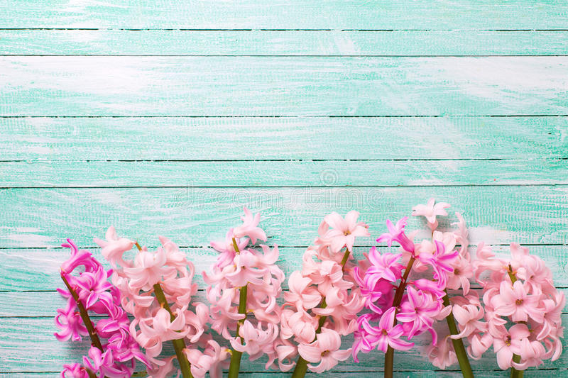 Background with fresh pink flower on turquoise painted wooden stock download background with fresh pink flower on turquoise painted wooden stock photo image of love mightylinksfo