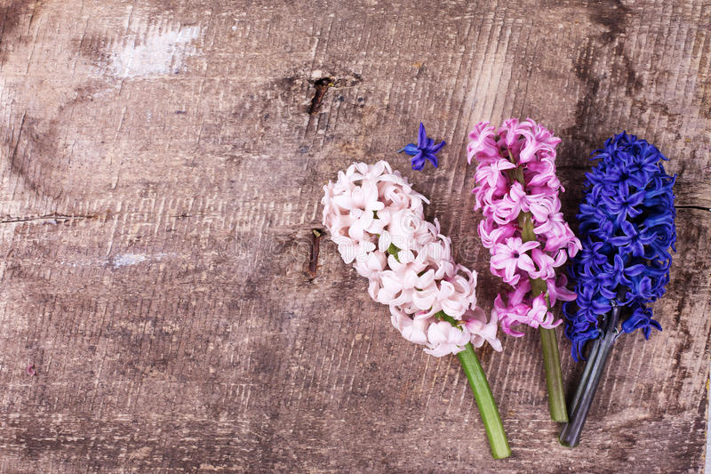 Background with fresh pink hyacinths on vintage wooden planks. Selective focus. Place for text. Top view royalty free stock images