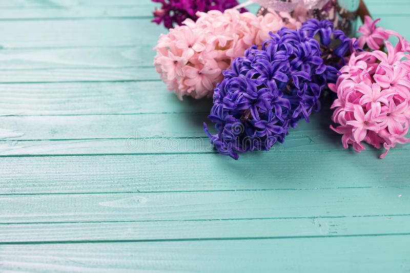 Background with fresh pink, violet, blue hyacinths on painted wooden planks. Selective focus. Place for text royalty free stock images