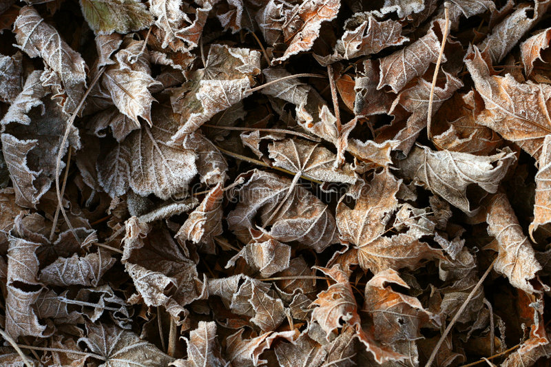 Background of frosty leaves stock images