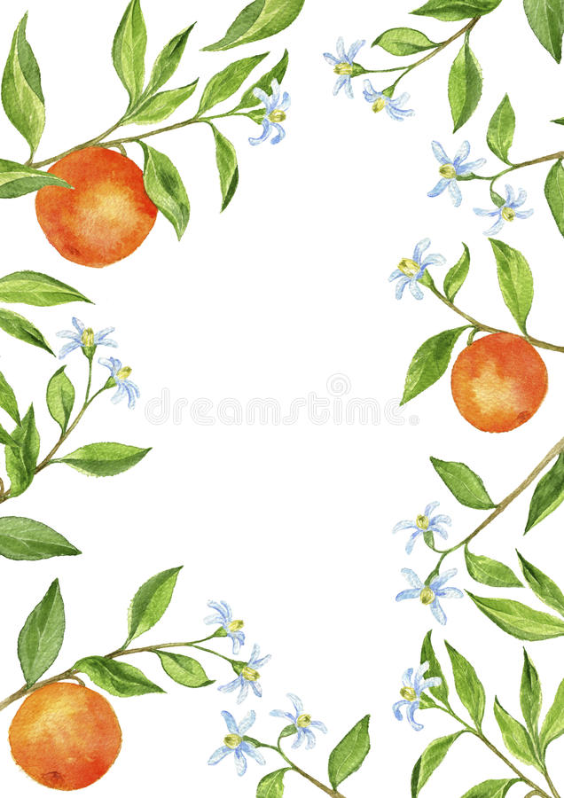 Background With Fruit Tree Branches, Flowers, Leaves And ...
