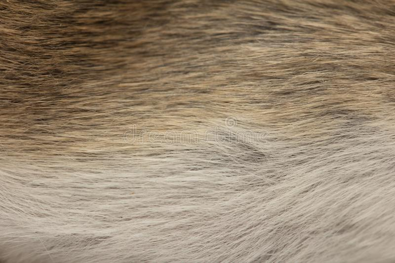 Background of fur mouse. macro stock images
