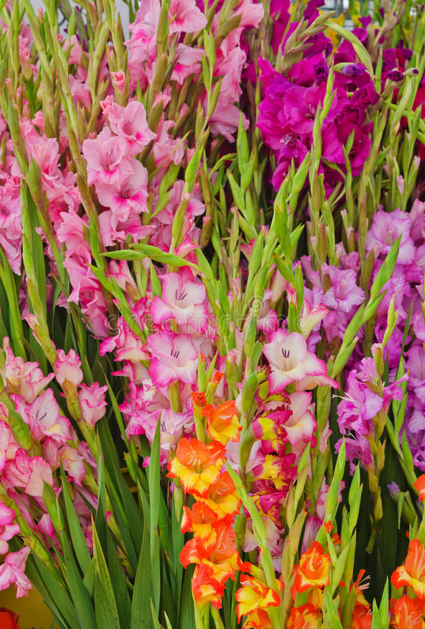 Background of Gladioli at Farmers Market stock photo