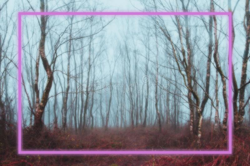 Background. A glowing pink neon rectangle framed over a spooky, misty winter forest. With a coloured blurred edit royalty free stock images