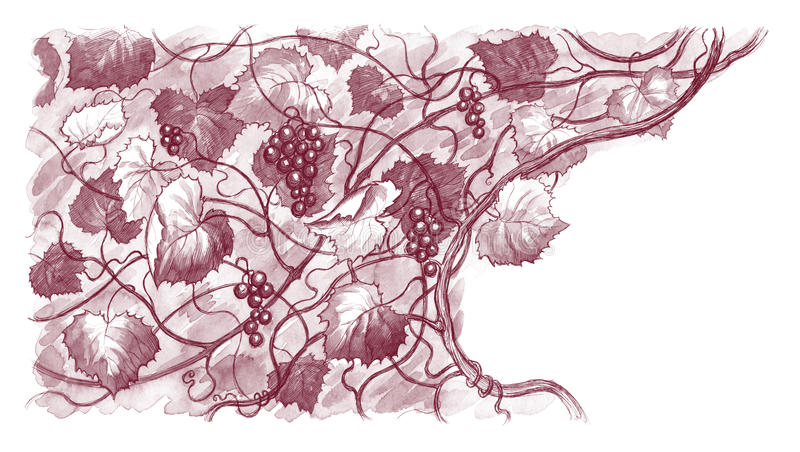 Background with grapes stock image