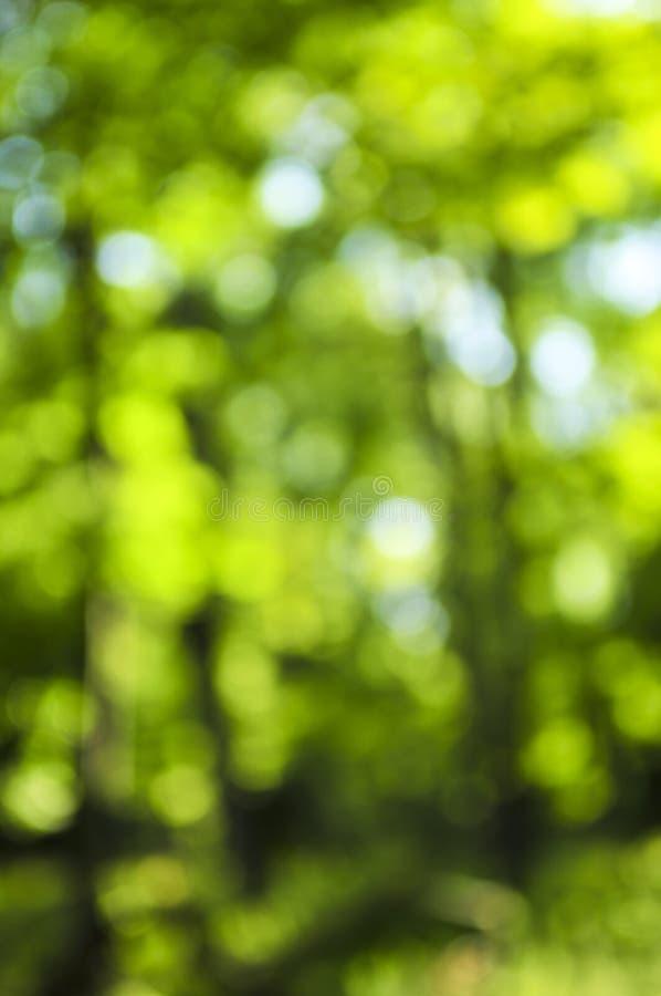 background green стоковые фотографии rf