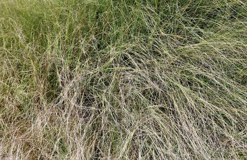 Background of green and dry grass. stock image