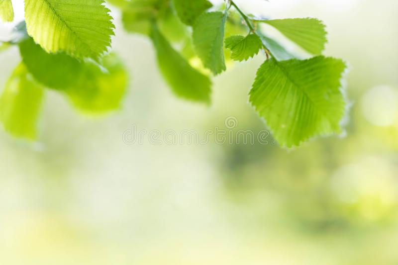 Background from green fresh foliage of trees in software focus. stock photos