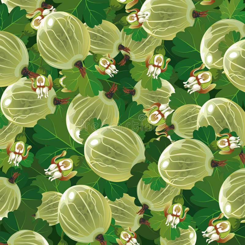 Background Of The Green Gooseberry Stock Photos