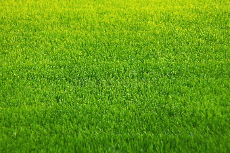 Background of green grass. Amazing grass texture. Green background.Park lawn texture.  stock images