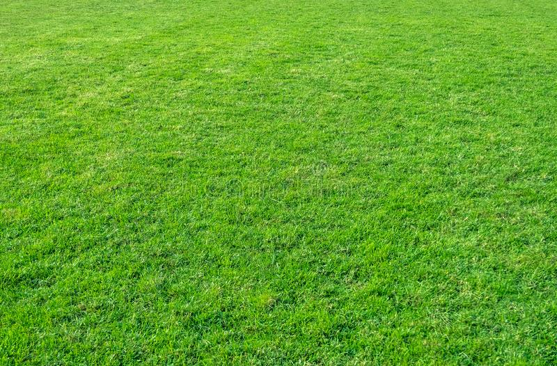 Background of green grass field. Green grass pattern and texture. Green lawn background royalty free stock images
