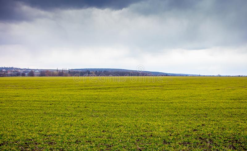 Background from green grass and sky. Landscape: Field with green grass and cloudy sky_. Background from green grass and sky. Landscape: Field with green grass royalty free stock photography