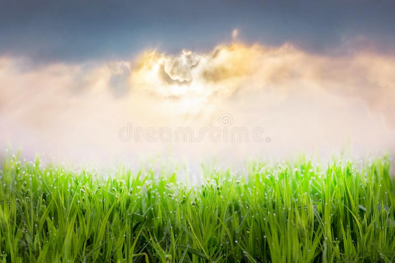 Background of green grass and sky at sunset_. Background of green grass and sky at sunset royalty free stock photo