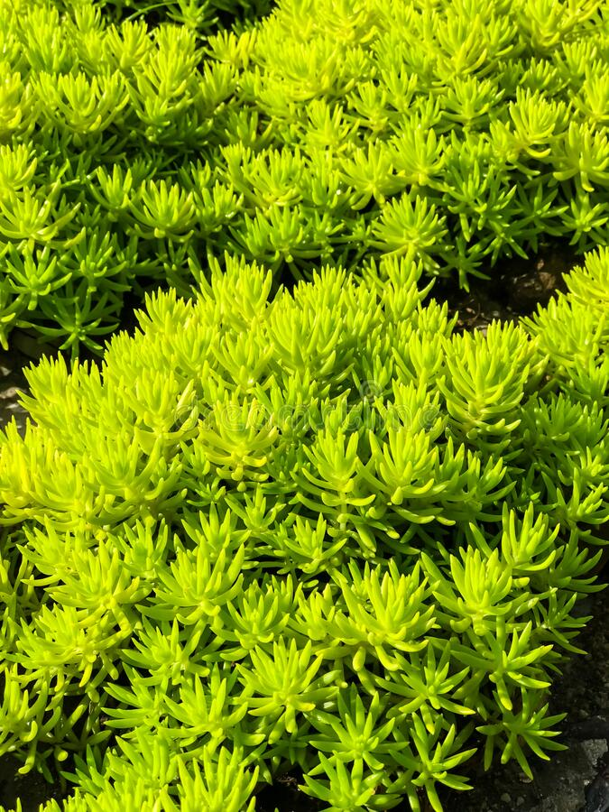 Background of green plant. Beautiful background of green plant royalty free stock image
