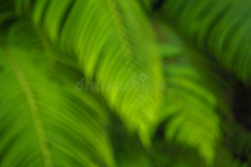 Background of green plants with a blurry background stock photography