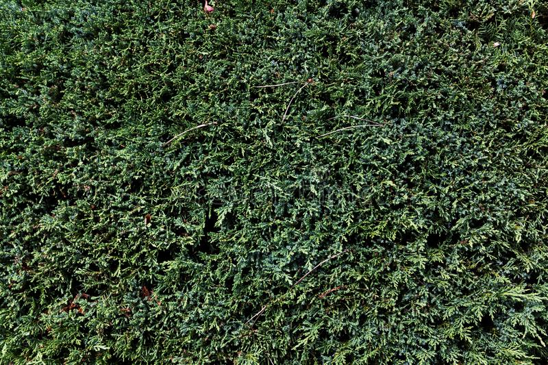 Background of green plants - great for a cool wallpaper. A background of green plants - great for a cool wallpaper royalty free stock photography