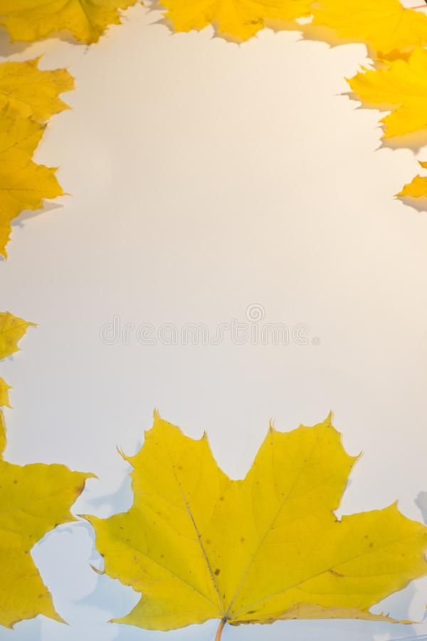 Background group autumn orange leaves. Outdoor. Background group autumn orange leaves. Outdoor stock images