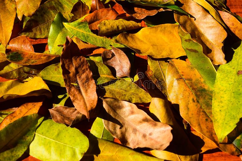 Background group autumn orange leaves. Outdoor.  royalty free stock images