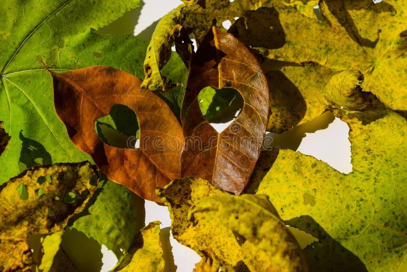 Background group autumn orange leaves. Outdoor.  royalty free stock image