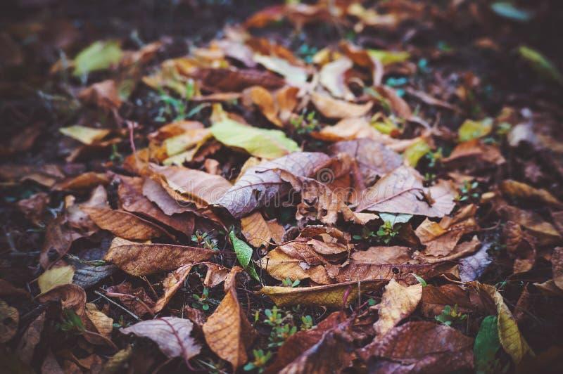 Background group autumn orange leaves. Outdoor. tinted photo stock photo