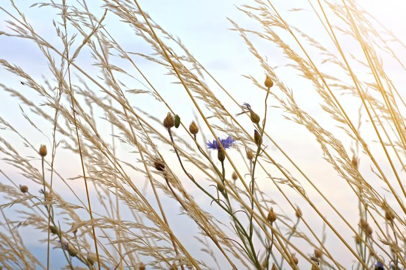 Background of high grass and flowers against the sky.  royalty free stock photography