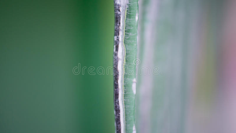 Background of icicles royalty free stock photo
