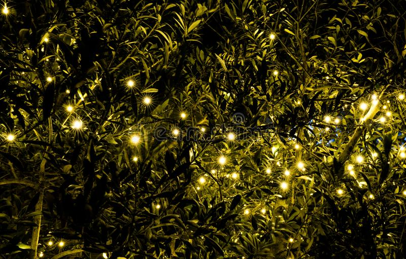 Background of an illuminated green bush with many golden lights royalty free stock photos
