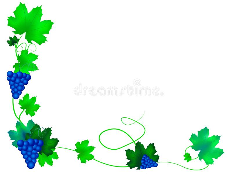 Grapes with leaves. Background illustration of grapes with leaves. White, isolated background royalty free illustration