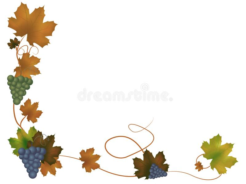 Grapes with leaves. Background illustration of grapes with leaves. White, isolated background vector illustration