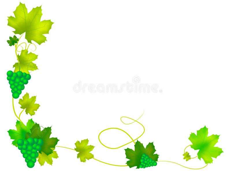 Grapes with leaves. Background illustration of green grapes with leaves royalty free illustration