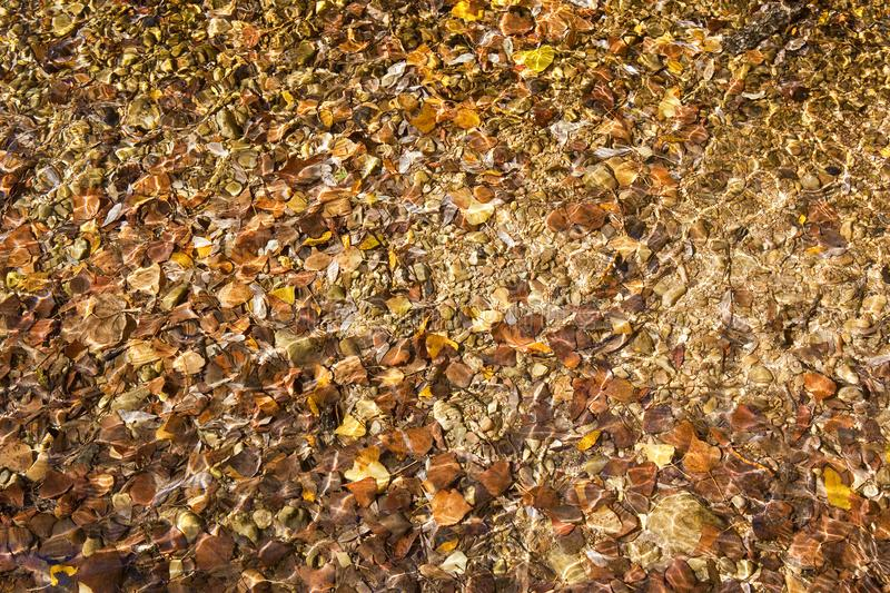Abstract background of rippled water over colorful leaves and stones royalty free stock images