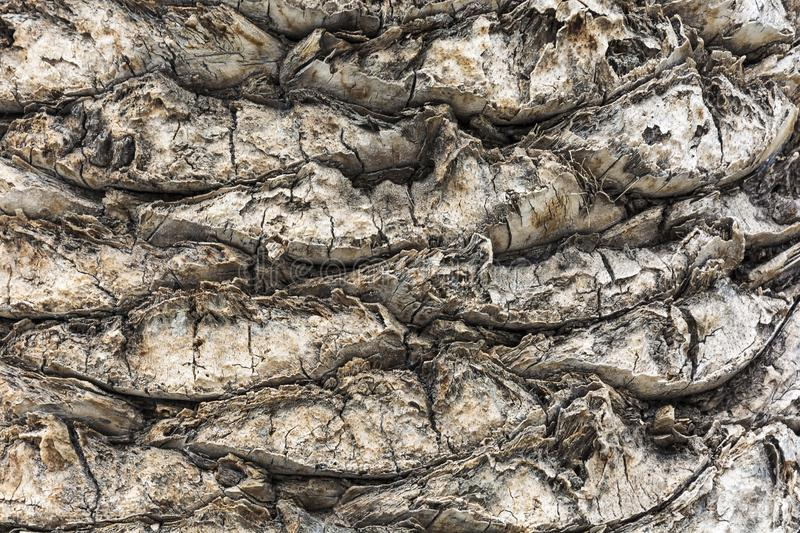 Background image. Fibrous structure of the trunk of a palm tree. royalty free stock image