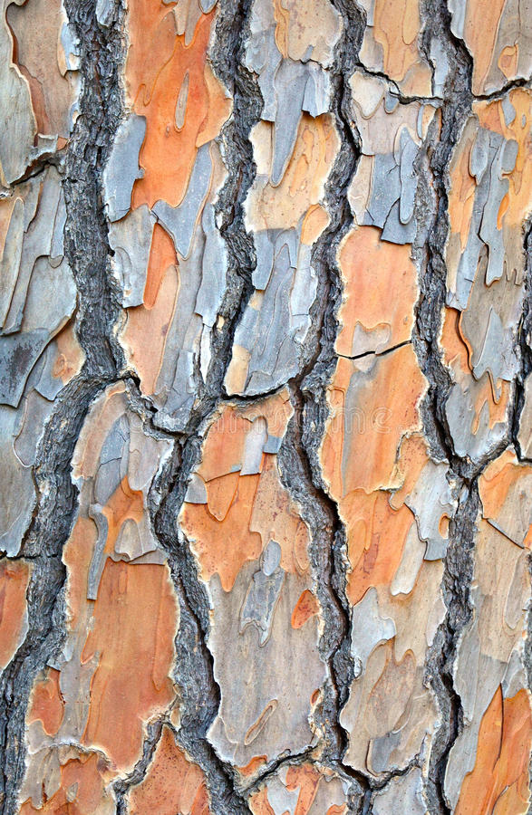 Download Background Image Od Tree Bark Stock Image - Image: 23086631