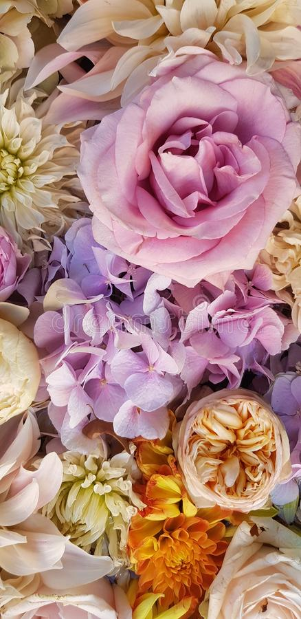 Background image of roses.  Colored fresh pastel roses. Pink and white roses and hydrangea. Background image of roses.  Colored fr. Esh pastel color flowers stock image