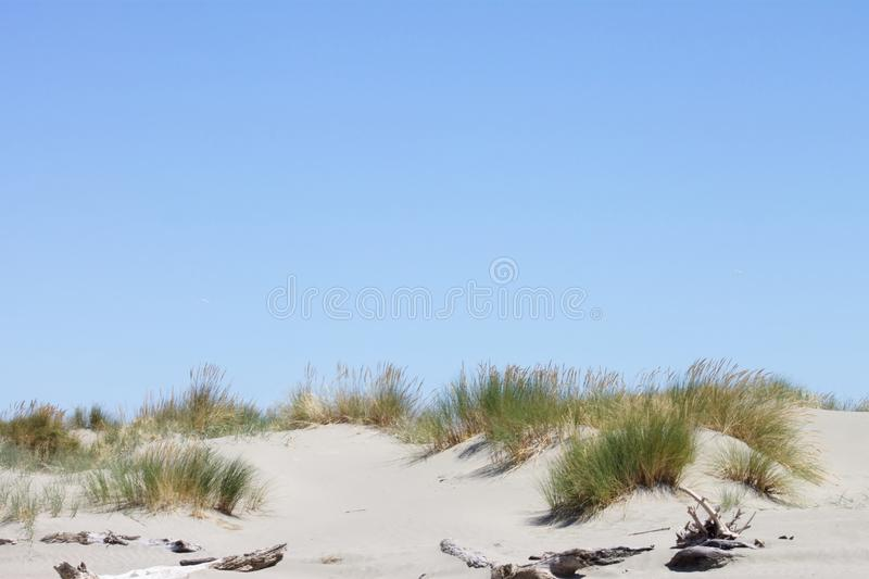 Background image of toi toi grass growing on top of a sand dune against a blue summer sky royalty free stock photography